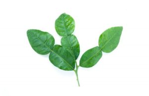 GHQ-Spirits-key-Botanicals-_0006_Layer 1